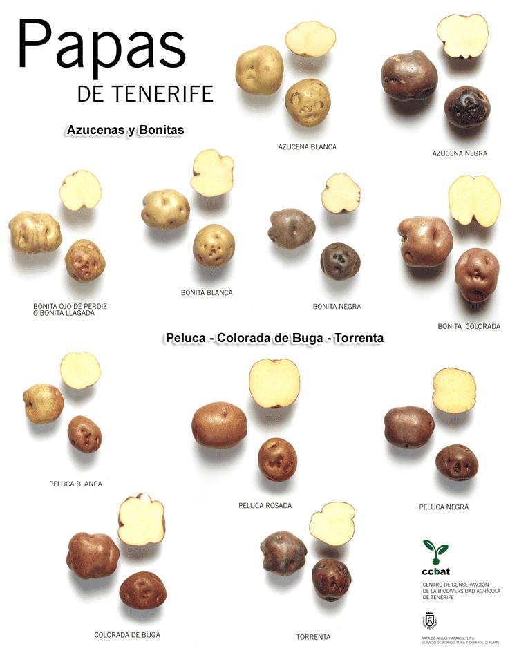 Variedades de patatas de Tenerife
