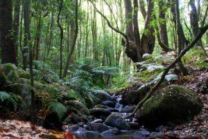Las Rutas de senderismo en La Gomera: Parque Natural de Garajonay