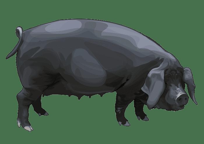 El cochino negro canario