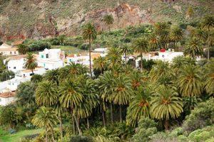 Palmeral de Santa Lucía, en La Gomera