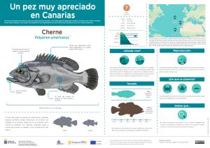 Infografía del cherne canario