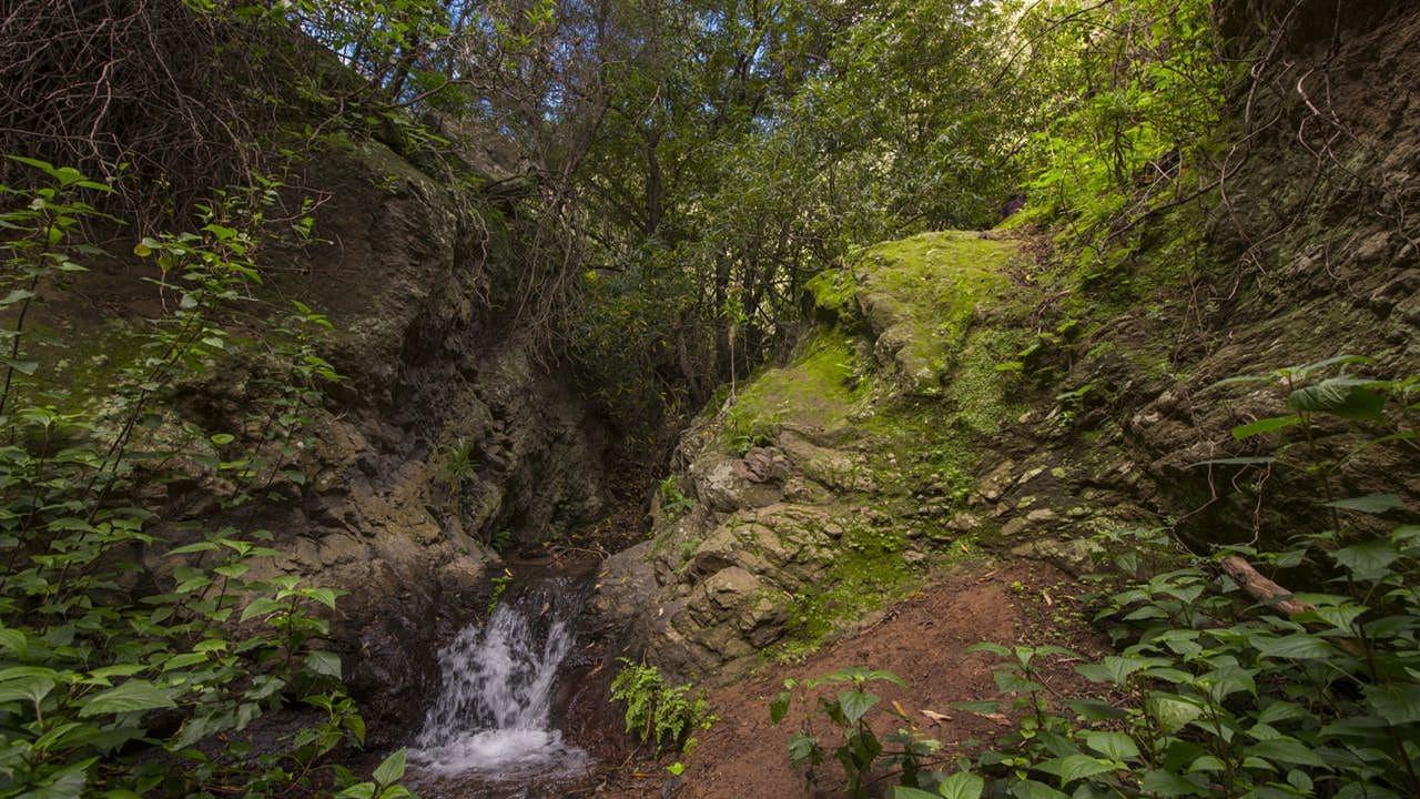 Ruta por el Barranco de los Cernícalos