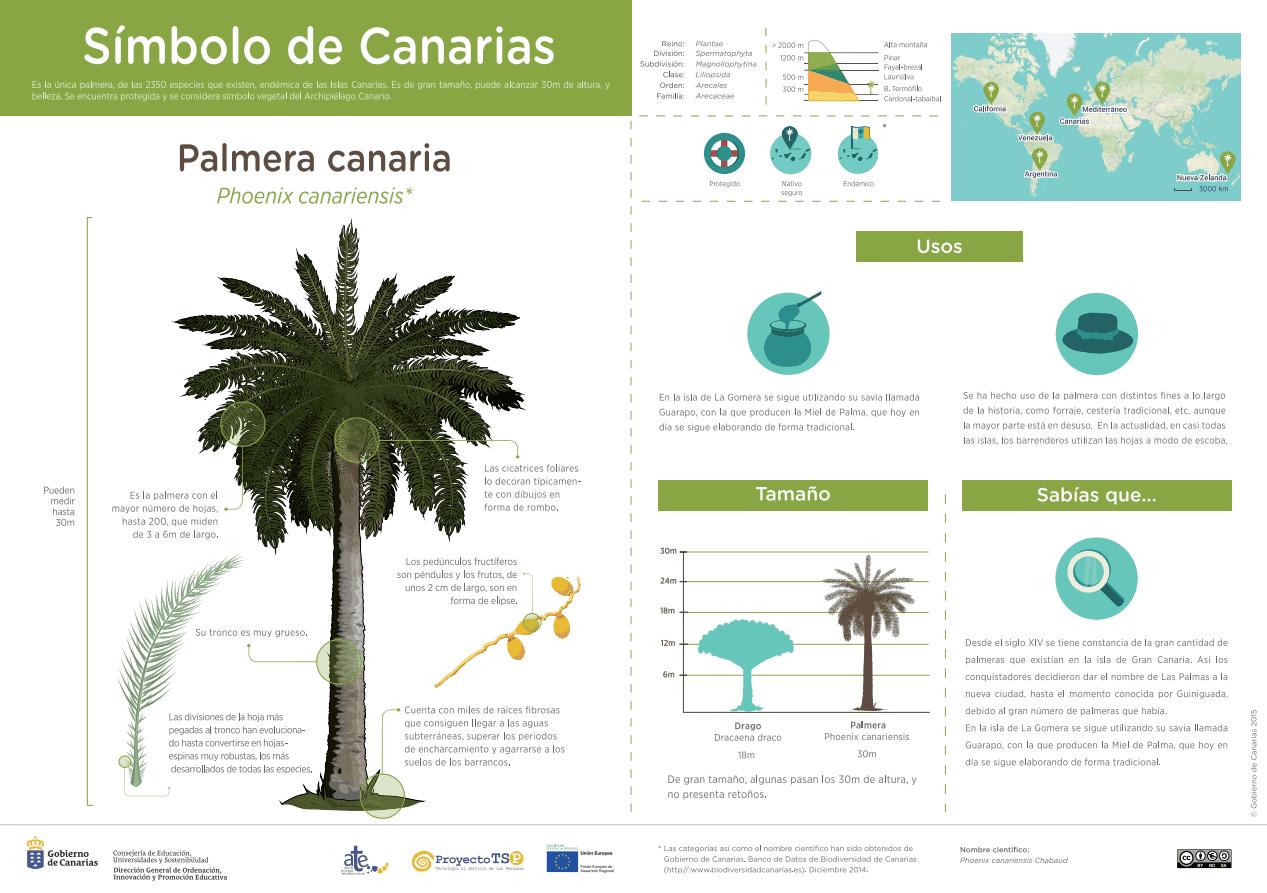 La palmera canaria, símbolo de las Islas