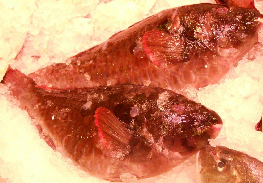 Vieja Canaria, exquisito pescado canario