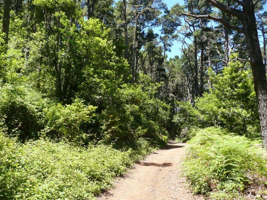 Rutas por Teneriwfe con niños, ruta circular Altos de Tacoronte