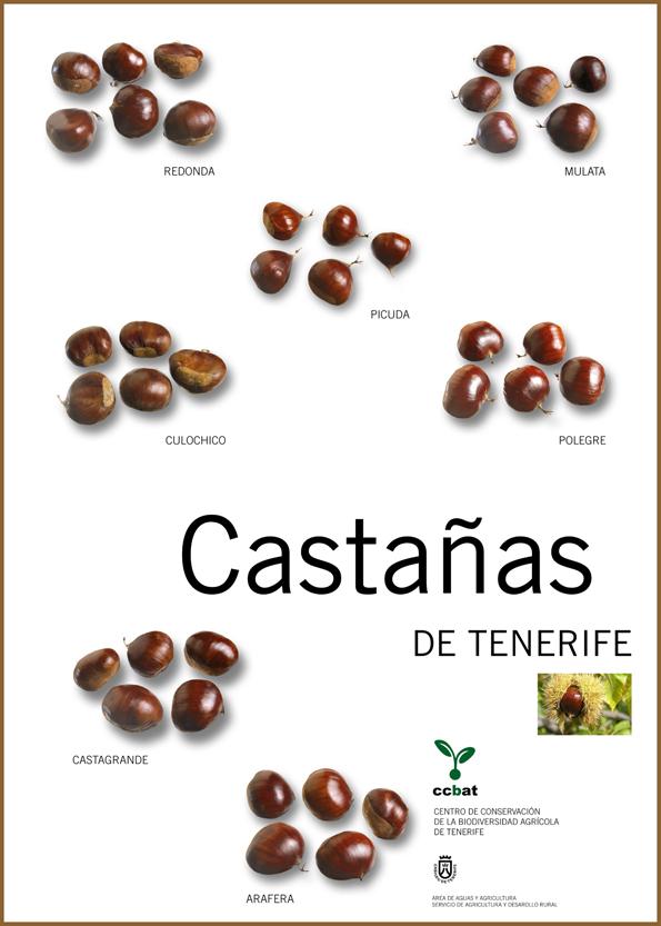 Variedad de castañas de Tenerife